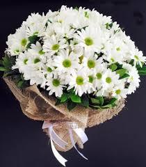 beyaz kırçiçeği buketi